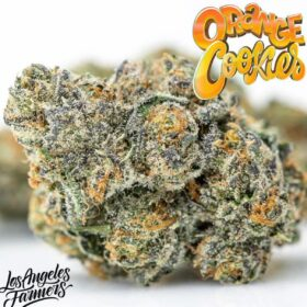 Order Orange Cookies Jungleboys online in New Delhi